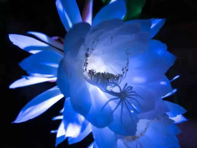 鲜花一什么成语_成语故事图片