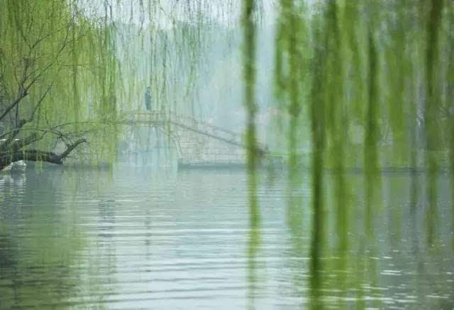 雨后竹林分外翠 南方的竹林格外多, 雨水对于竹林仿佛琼浆一样宝贵图片