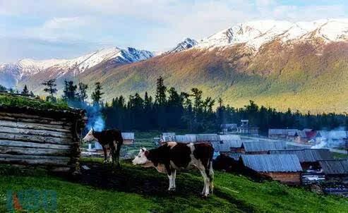 世界最美乡村top7:新疆阿勒泰图瓦村图片