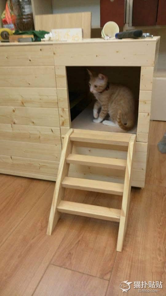 高大上!网友给家里的喵星人做了个纯木厕所