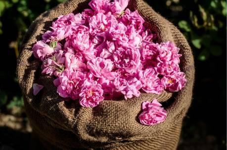 五月玫瑰_墨山繁花 五月玫瑰的生命礼赞