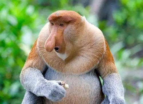 世界需要丑陋动物,去对抗那些被萌化的可爱动物