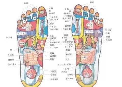 足底部外部位名称图解