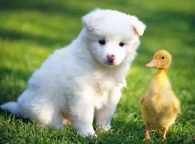 白底小动物萌图片