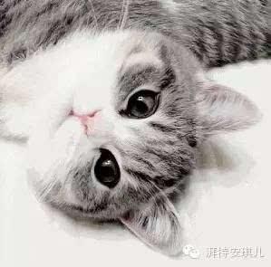 猫绝育后注意事项图片