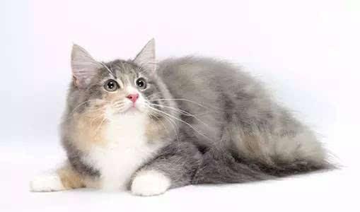 大花猫/  啥?再普通不过的大花猫有啥好介绍的?