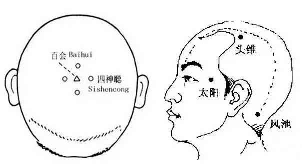 头部的经络图解