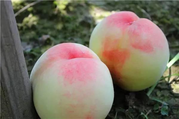 冰蓝水蜜桃图片