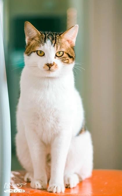可爱小猫咪图集高清锁屏壁纸