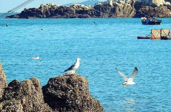 """以龙之九子命名的""""九龙泉"""",是海边留存下来的九口甜水古井,从唐代传承"""