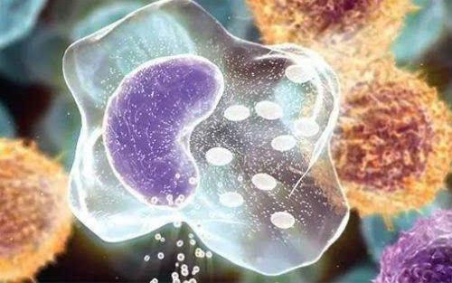 动物细胞和细菌中均