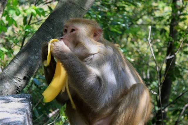 大香蕉网伊人小说图片