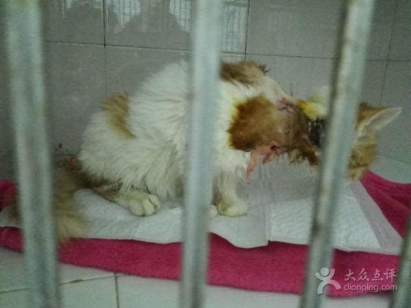 上海一 宠物救助中心 被指贩狗虐狗 屡遭举报