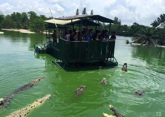 泰国芭提雅游客铁皮船钓鳄鱼 网友:花样作死