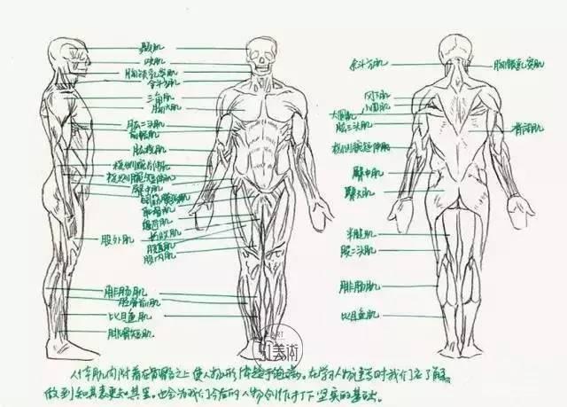 人体的骨骼构成了框架,用来支撑内在体系.