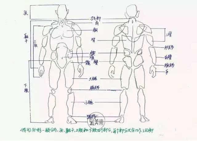 牛身体结构示意图