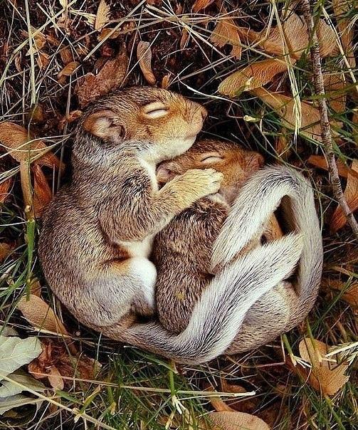 冬眠的动物松鼠画