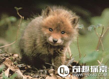 探访实拍陕西动物实验中心