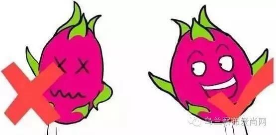 火龙果:不要瘦子,越胖代表越成熟图片