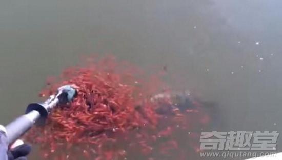 男子钓到怪鱼身上竟缠着这东西(图)
