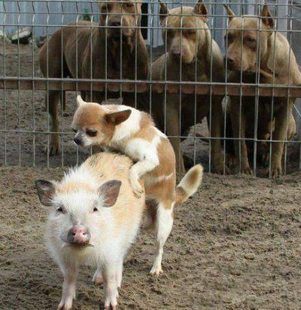 动物图片 浏览量:82 笑一笑十年少,笑一笑忘记所有烦恼,让我们来开怀