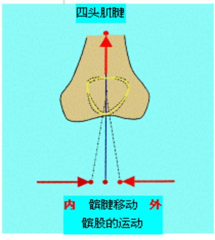 骨科基础 | 详解维持髌骨稳定性的解剖机制