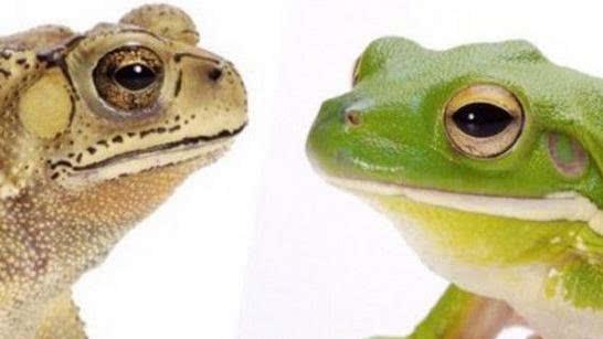 青蛙和癞蛤蟆的派系区别