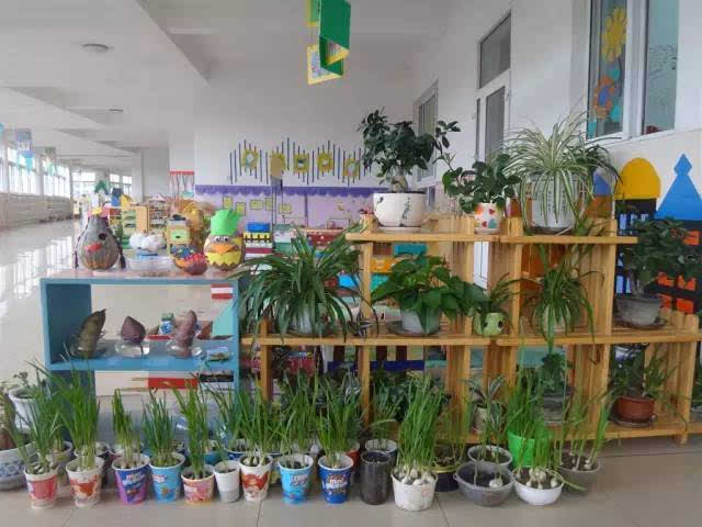 幼儿园自然角环境创设布置大全