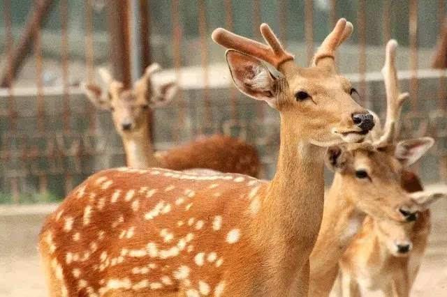 野生动物制品入药,你怎么看?