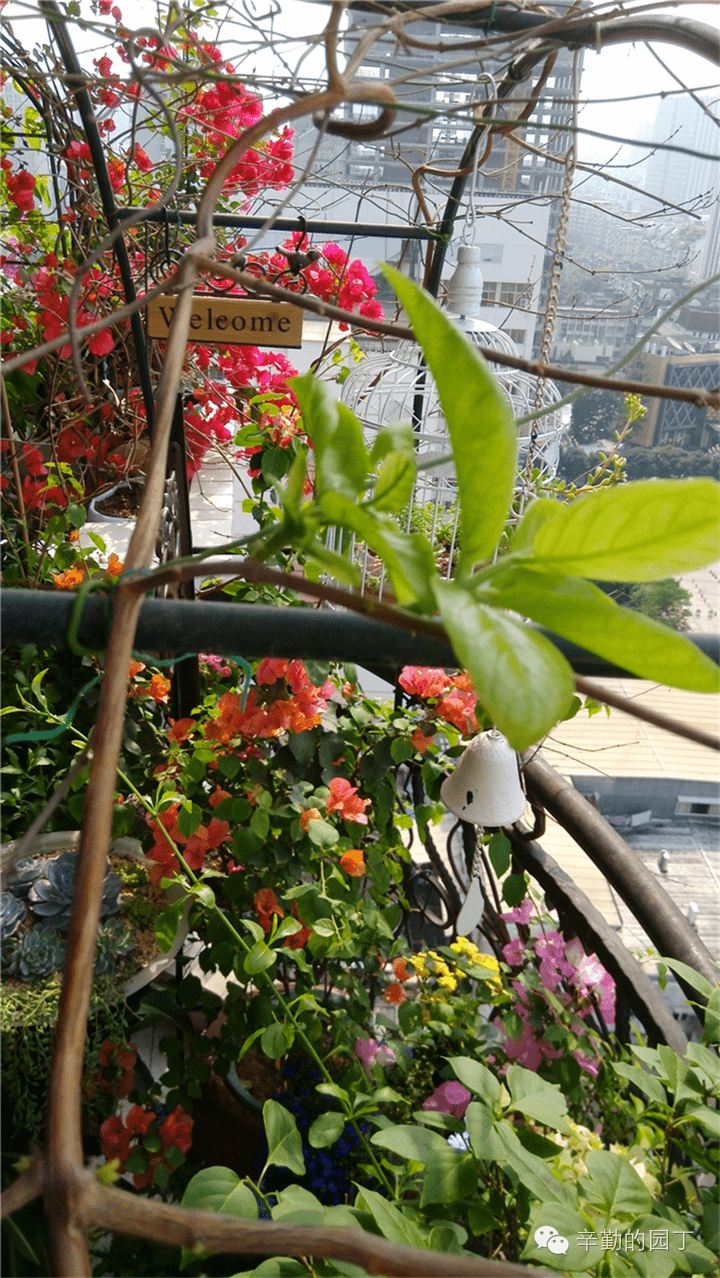 园丁奖阳台组 012号 小阳台的花园情怀