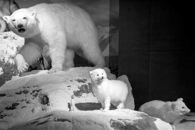 展区内的103个野生动物标本,都是美国人肯尼斯·贝林捐赠的.