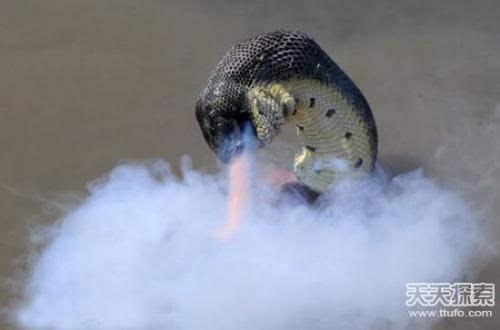 男子野外发现外型像龙的生物 揭震惊全国的真龙事件