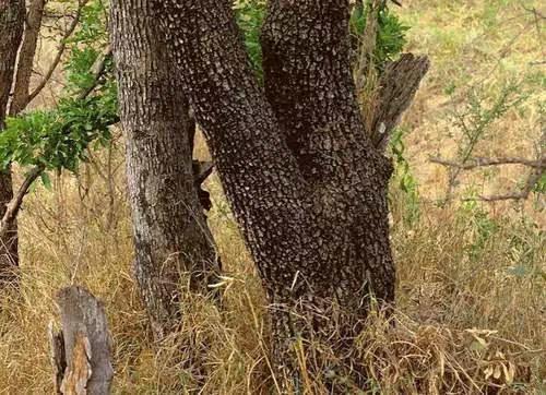 据说智商高的人才能找出图中隐藏的动物