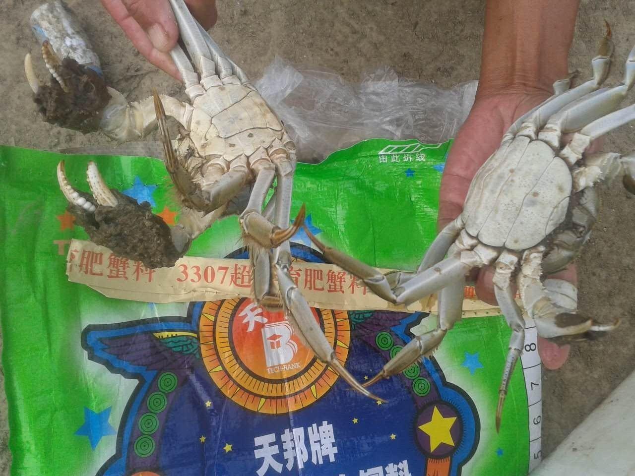 全熟化河蟹育肥料的氨基酸结构根据河蟹营养需求进行最优调整,可保持