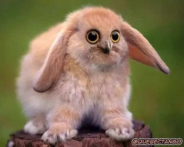 全世界最奇葩的动物,你一定没有见过!