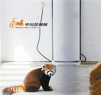 37 徐州市动物园动物们吹着空调吃西瓜