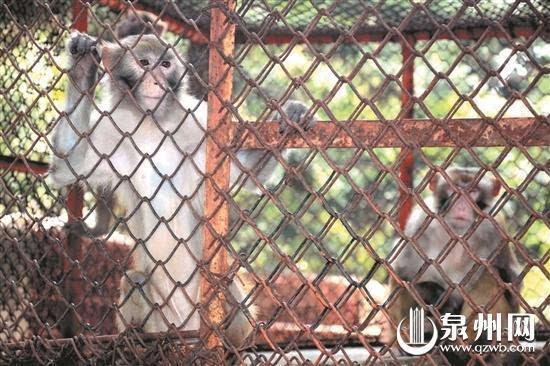 晋江一公园改造动物园没收入 31只动物集体挨饿