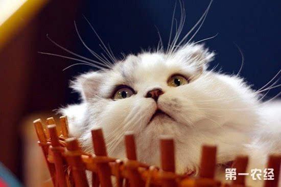 猫咪牙周炎好治疗么图片