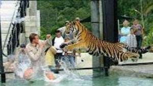 老虎咬人事件追踪图片