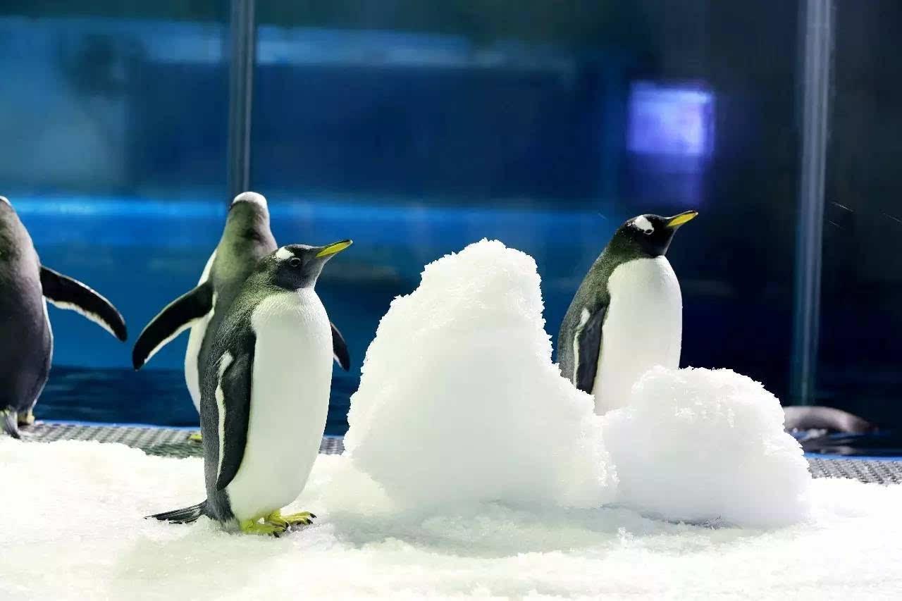 极地动物们这样避暑!(视频)呆萌的不要不要的!