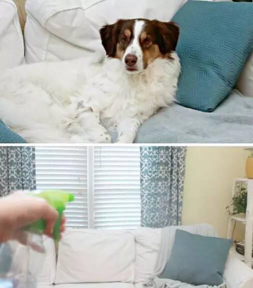 布沙发难清理,用这些就能搞定! - 格格 - 格格的博客