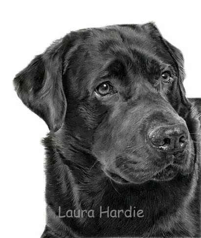 laura开始用铅笔与彩铅手绘动物肖像    画着画着,她发现了自己描绘