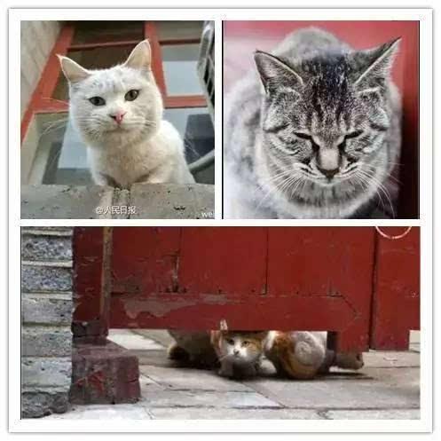 壁纸 动物 猫 猫咪 小猫 桌面 497_497