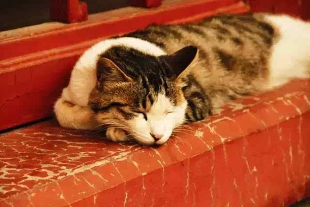 网红猫 | 终于不用下岗了