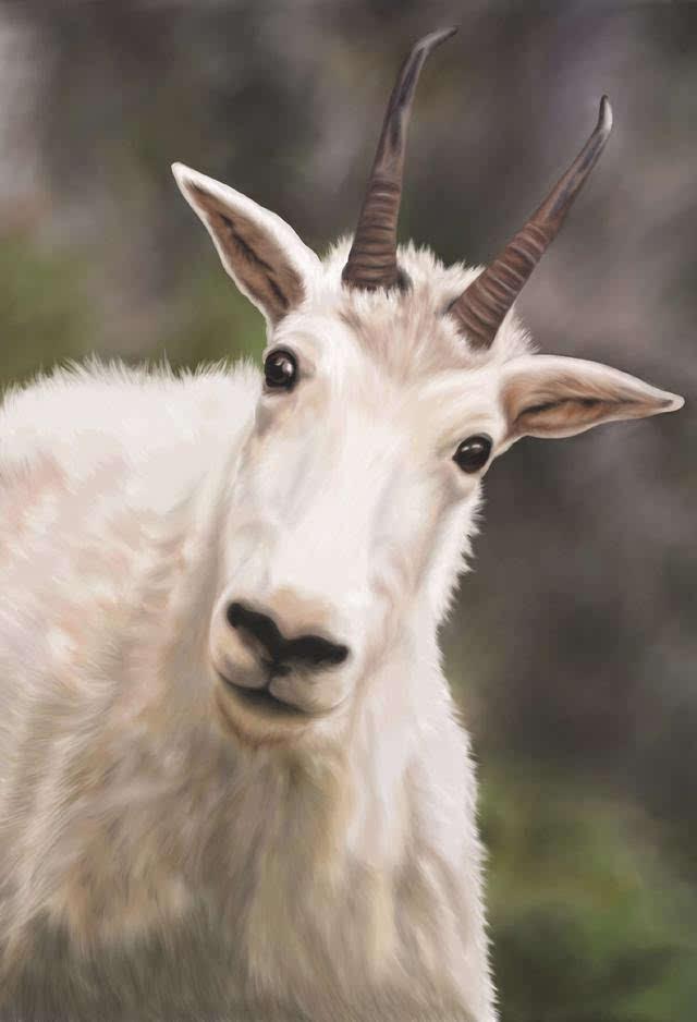 旅行  让野生动物保持野性!国家公园野生动物观看指南