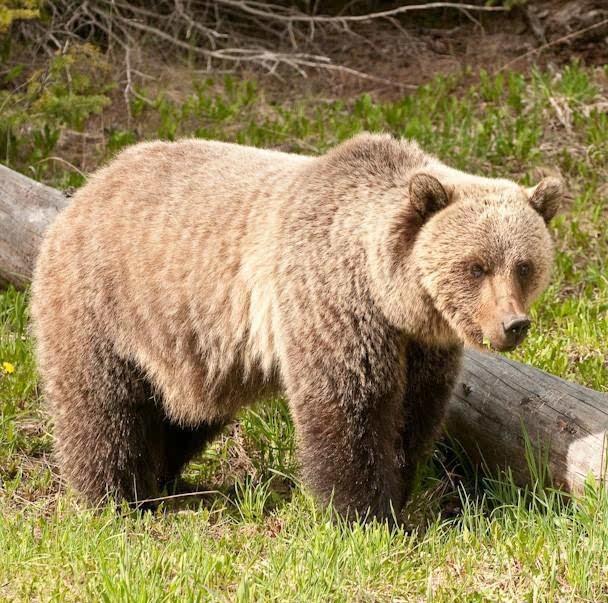 旅行| 让野生动物保持野性!国家公园野生动物观看指南