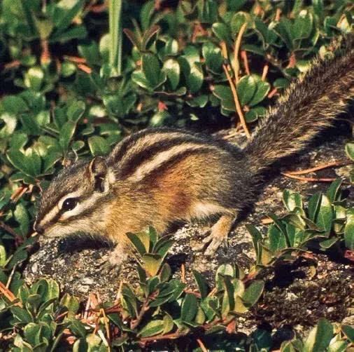 国家公园野生动物观看指南
