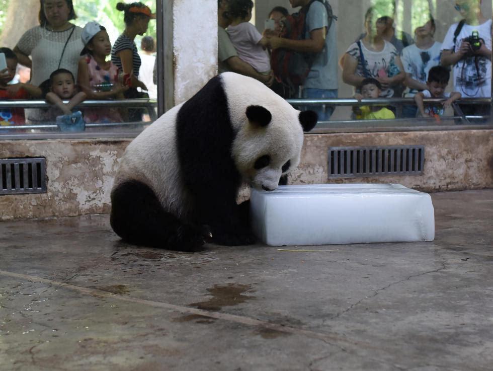 壁纸 大熊猫 动物 980_737