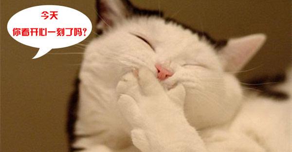 萌萌哒的动物图片,各有各的萌表情