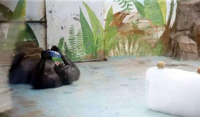 城事丨哈哈哈哈哈哈,最近郑州动物园为了给动物降温,也是拼了啊